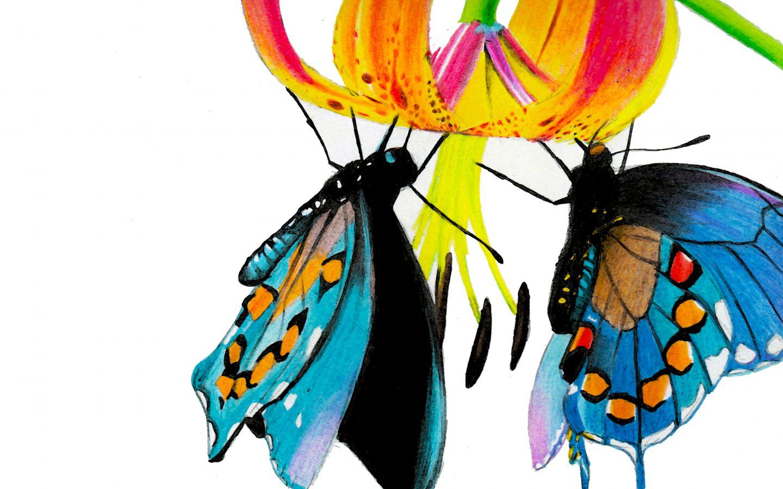 cropped-butterflieslaptop.jpg